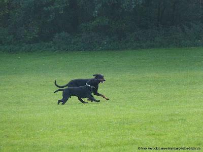 Hundewiese in Hamburg