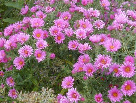 Piante e fiori aprile 2011 for Fiori da ombra perenni