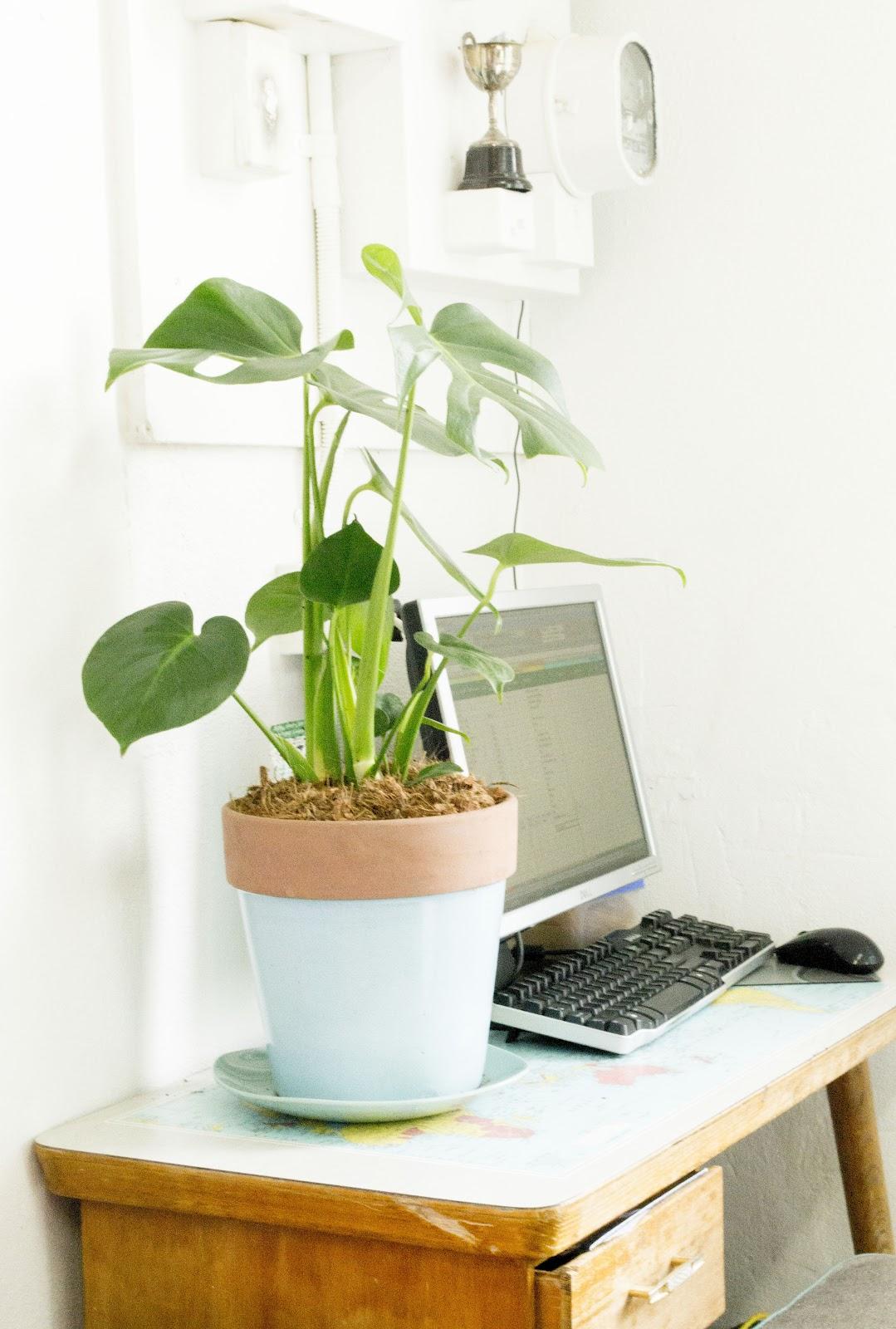 Work Mood Booster Buy A Desk Plant Plants Desks And