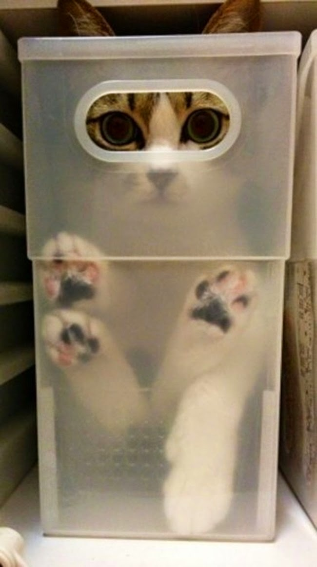 cats who mastered the art of hid and seek-7