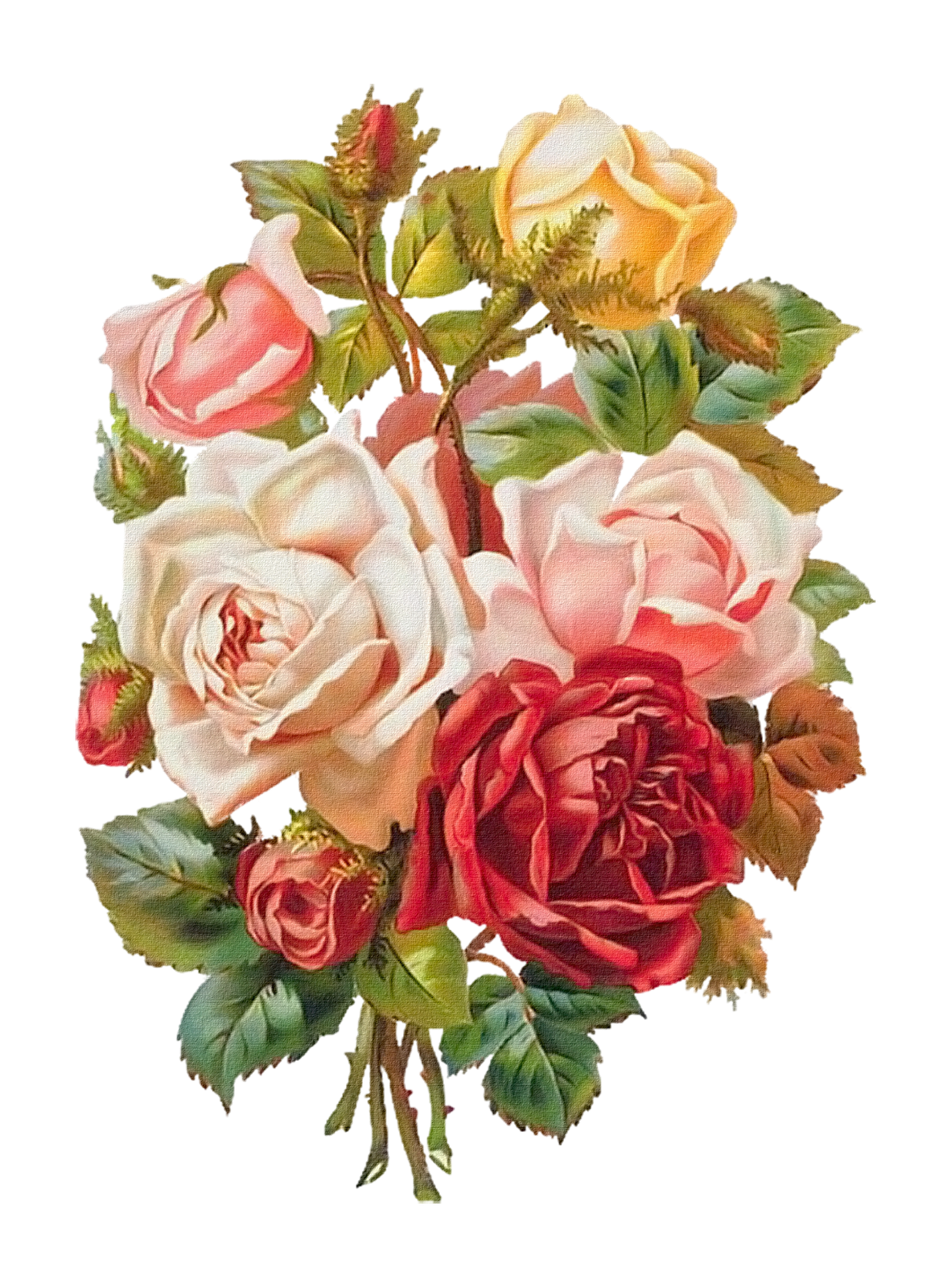 Old fashioned rose bouquet 91
