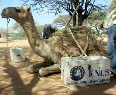 camel book mobile