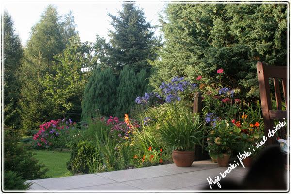 Cztery pory roku w moim ogrodzie,lato