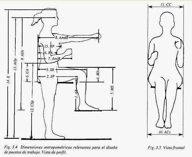 Son las medidas antropom tricas cwiek for Medidas antropometricas del cuerpo humano