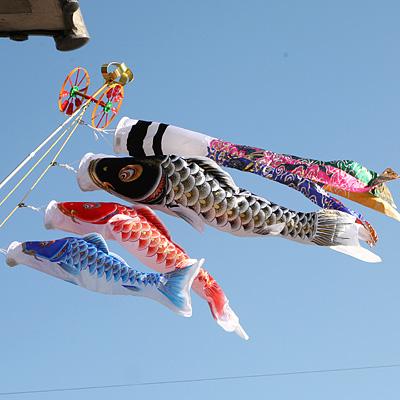 Natsu no rakuen japanese carp kites for Japanese fish flag