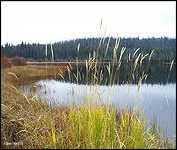 Rose Lake.