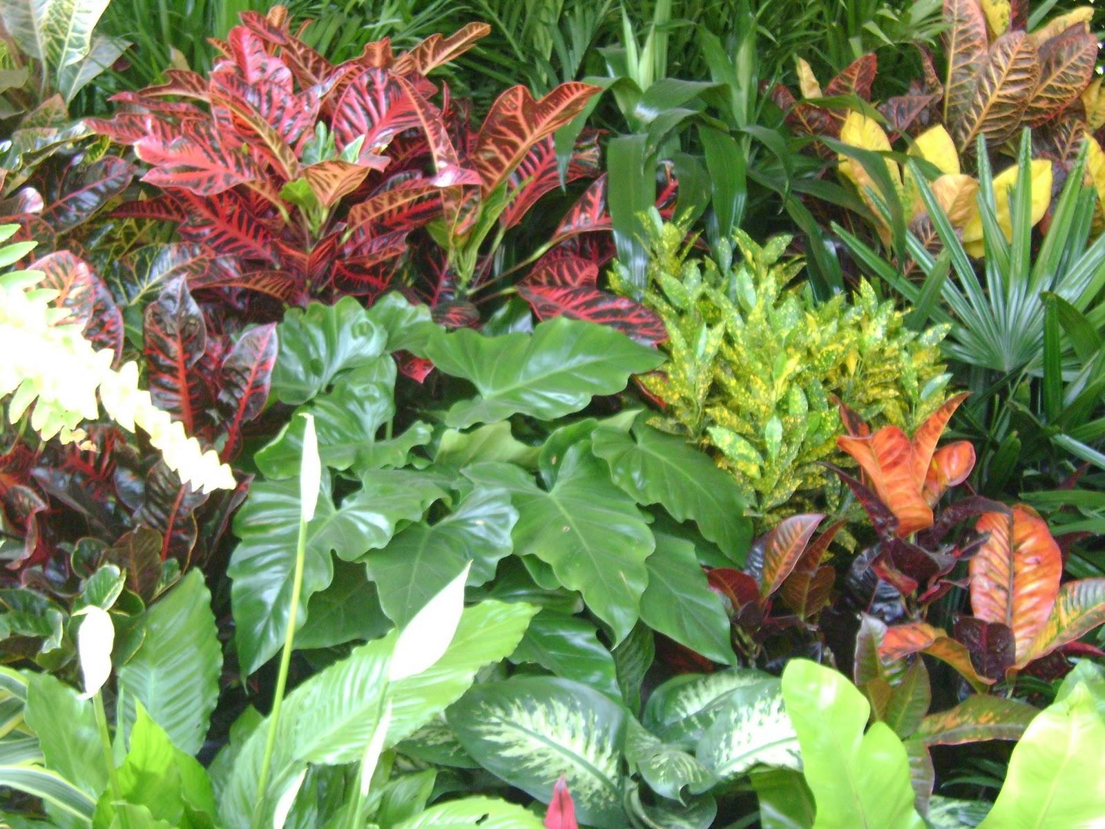 Jardines y macetas fotos de plantas de interior y exterior - Plantas de jardin exterior ...