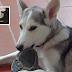 """Ο Νίκος Μαστοράκης γράφει (με πολλή τρυφερότητα) για την  """"Εφημερίδα των Σκύλων""""  και τα αγαπημένα του τετράποδα!"""