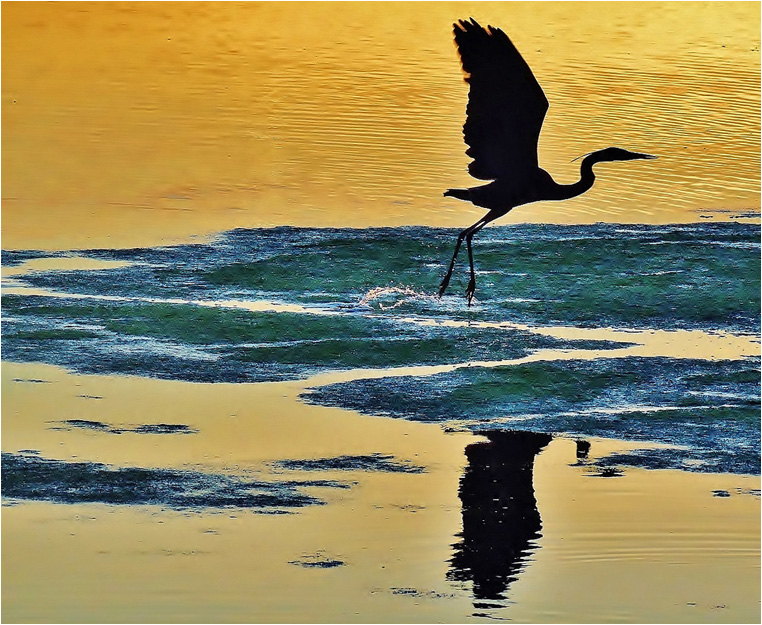 Compact Camera, Best Photo of the Day in Emphoka by Walking Bolsa Chica, Nikon Coolpix P510, https://flic.kr/p/osM5wY