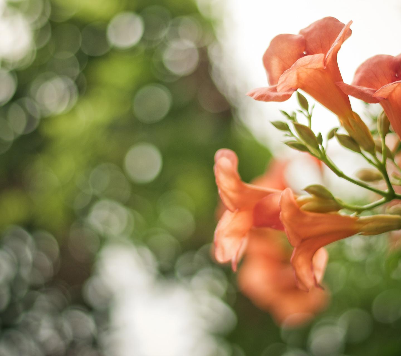 http://3.bp.blogspot.com/-sMYjeOGQjro/ULPU8XdJj8I/AAAAAAAALY8/Pd0ITvz9YBI/s1600/pink-flowers-bokeh-samsung-galaxy-s3-wallpaper.jpg