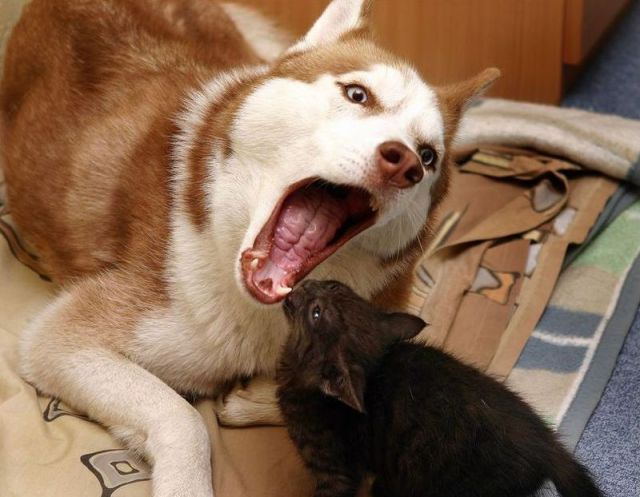 Funny Cats And Dogs Friends Seen On www.coolpicturegallery.us