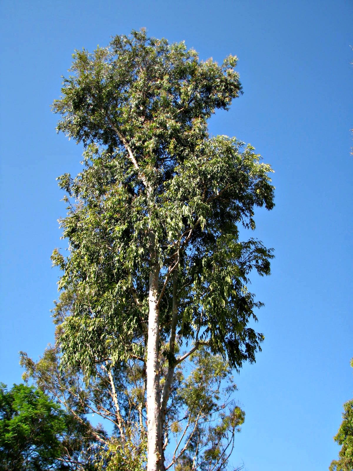 Planting Under Eucalyptus Trees : Beauty ashes eucalyptus botanicals and a walk with my boys