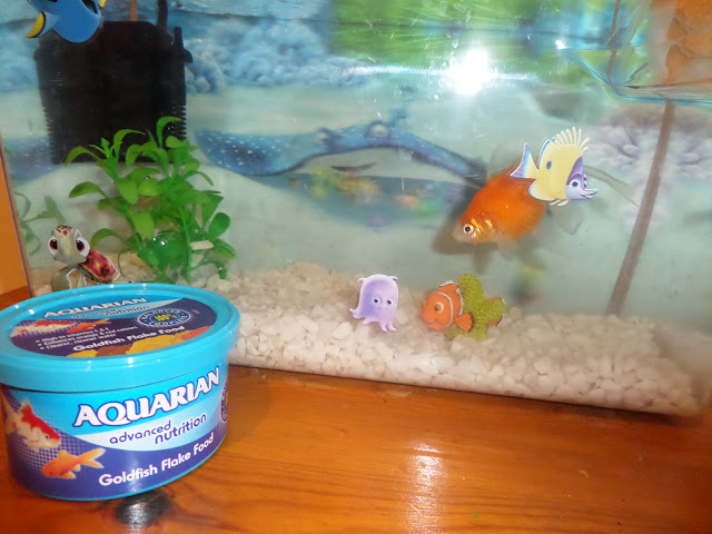 #shop #goldfish #MarsPetcare