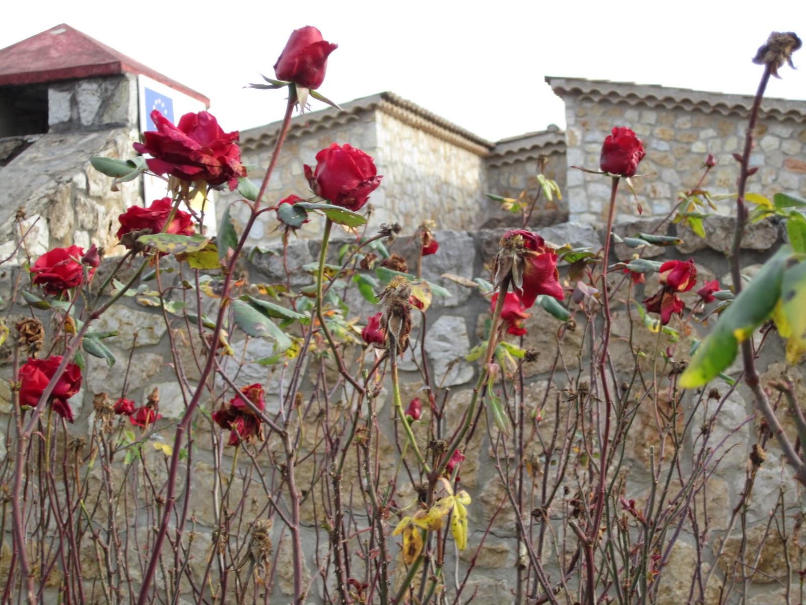 Cuentos chinos noviembre 2011 for Cancion jardin de rosas
