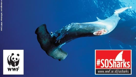 Support Our Sharks: #SOSharks