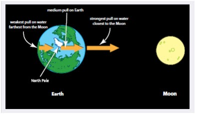 a discussion on gravity and the earths tides Long before recorded history, humans observed the world around them, taking note of the rise and fall of tides, the phases of the moon, and countless other physical and astronomical phenomena.
