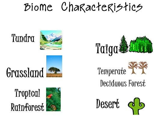 aquatic biomes and tropical rainforest essay Tropical rainforest biome the earth consists of a myriad of charming places it's also home to numerous plant and animal species including humans this entire species.