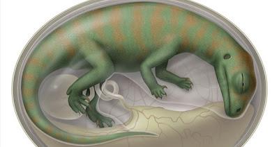 Embrión de Dinosaurio
