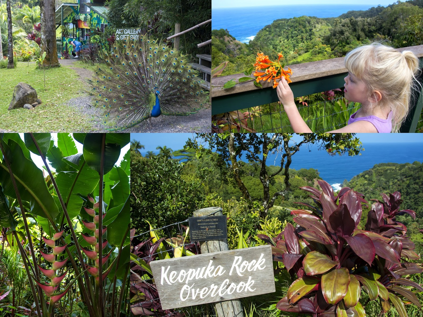 All things elise alina road to hana with kids part i for Jardin of eden
