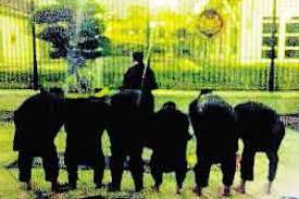 kumpulan Panji Hitam,rampas istana negara