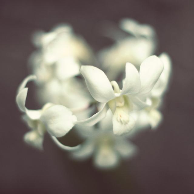 grandma's orchid