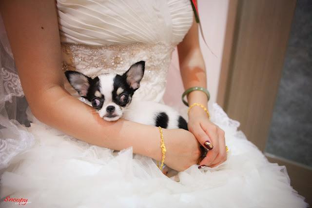 宜蘭婚攝snoopy