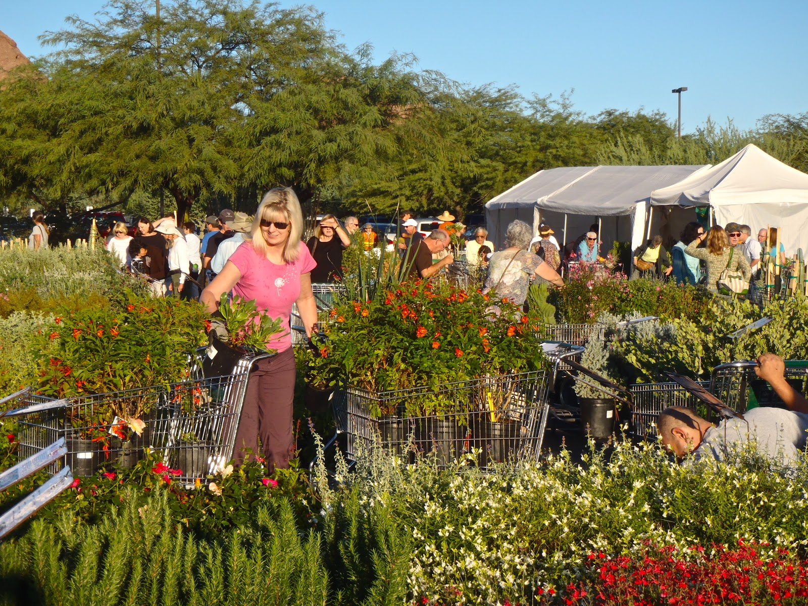 Scottsdale Daily Photo: Photo: Picking out Plants at the Desert ...