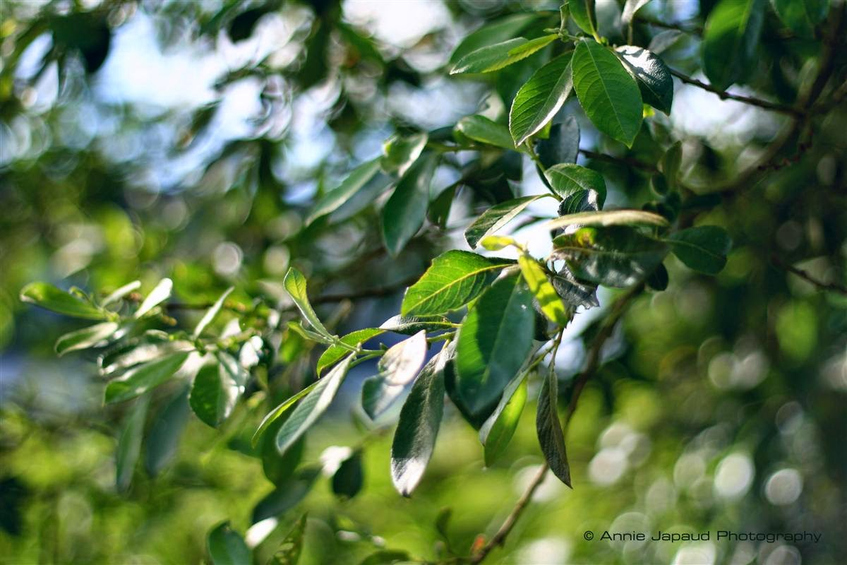 leaves, nature, trees, summer