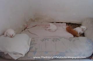 gaya tidur anak kucing