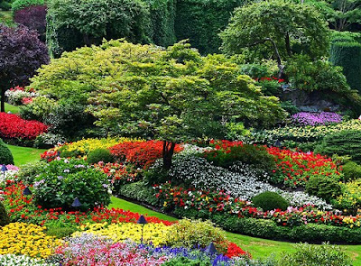 most beautiful Garden Photos