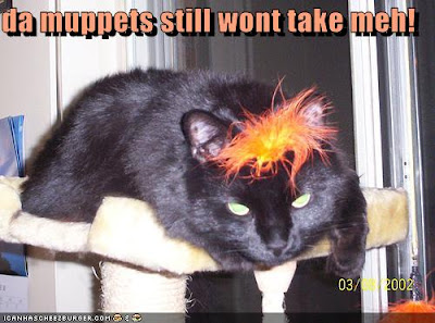 Muppet kitty