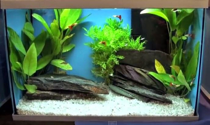vinhaqua.com - Hồ thủy sinh trọn bộ đơn giản