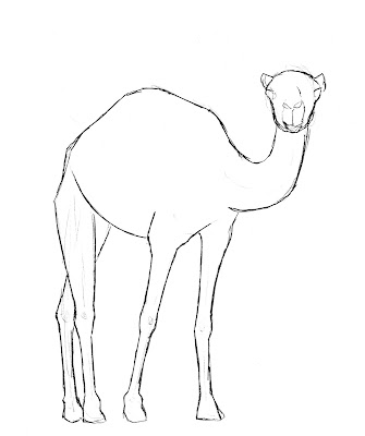 draw camel sketch