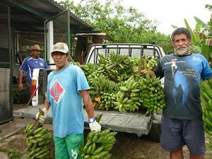 Agricultores entregando banana.