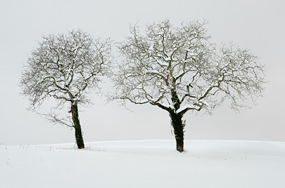 Image of 2 trees in the snow