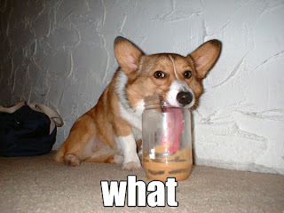 corgi puppy eating peanut butter from a jar