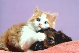 Estos divertidos Gatos y Perros
