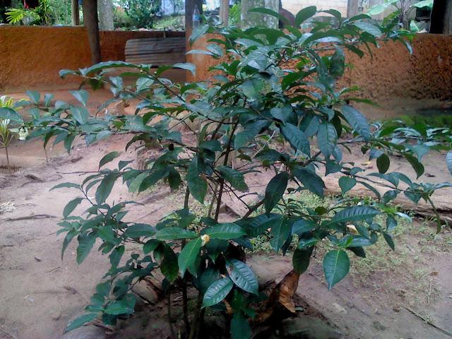 spice garden kandy sri lanka