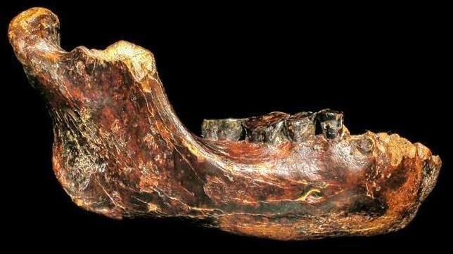 fosil hominido penghu1  644x362 - Identifican posible especie humana extinta