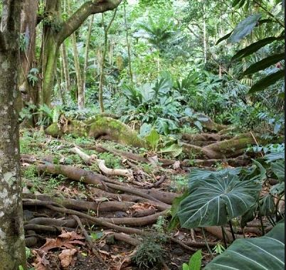 snakes-sambiasa-forest