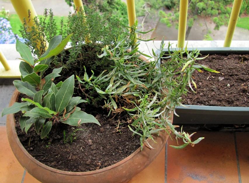 Eph m res un jardin sur mon balcon - Un jardin sur mon balcon ...