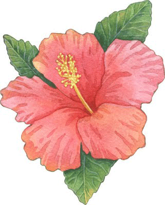 Dibujo de hibiscus