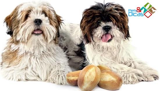 Cão e pão