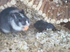Baby Maus bei Papa Maus