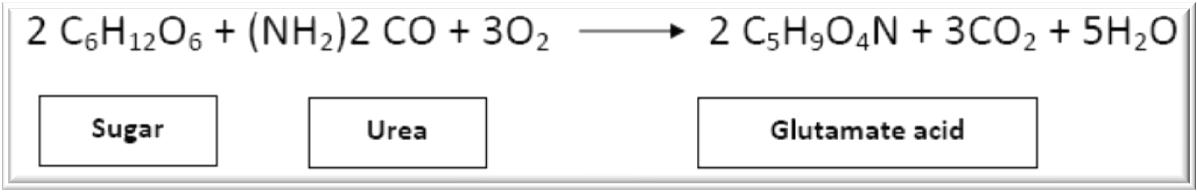 production of monosodium glutamate by fermentation pdf