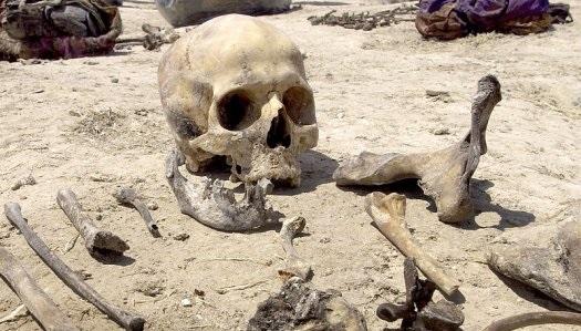Animais com esqueleto ósseo interno estão em minoria