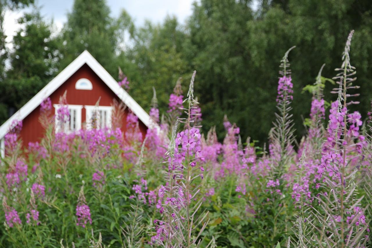 Schweden, Schwedenrote Häuser