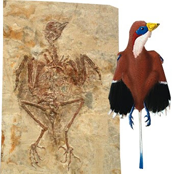 aves prehistoricas Protopteryx