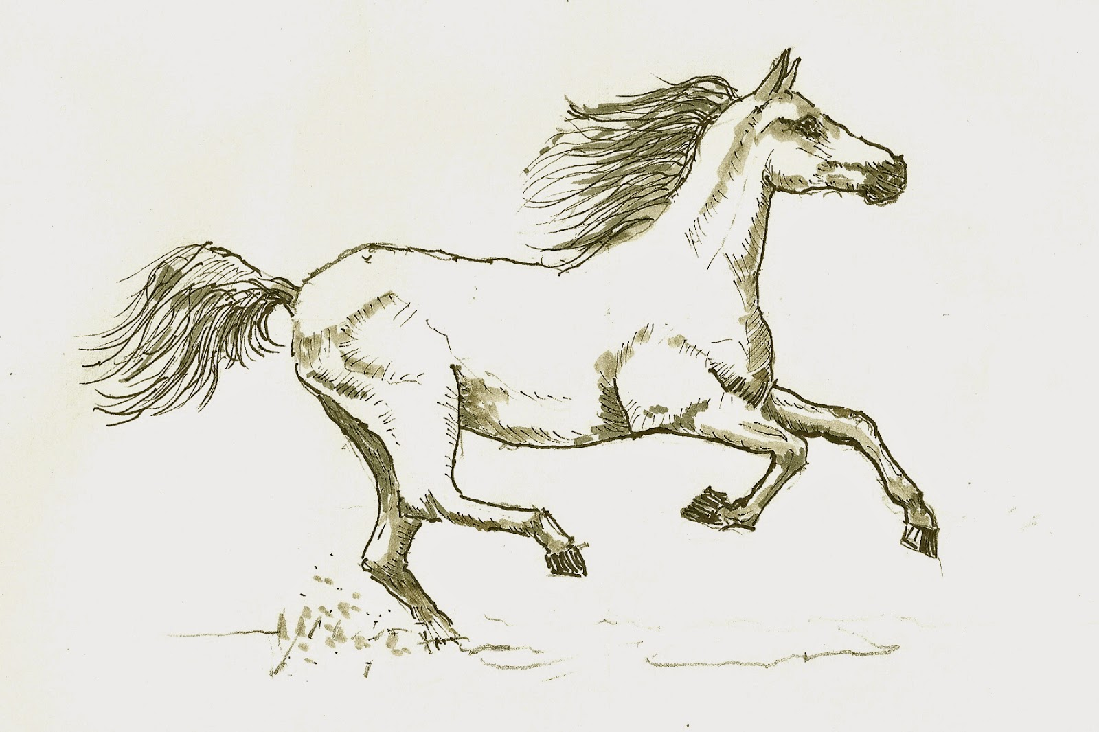 Galloping horse sketches - photo#19