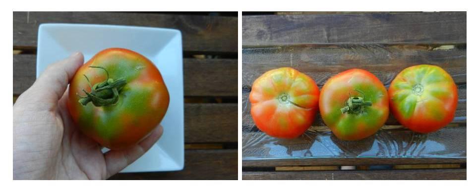 tomate saint michel